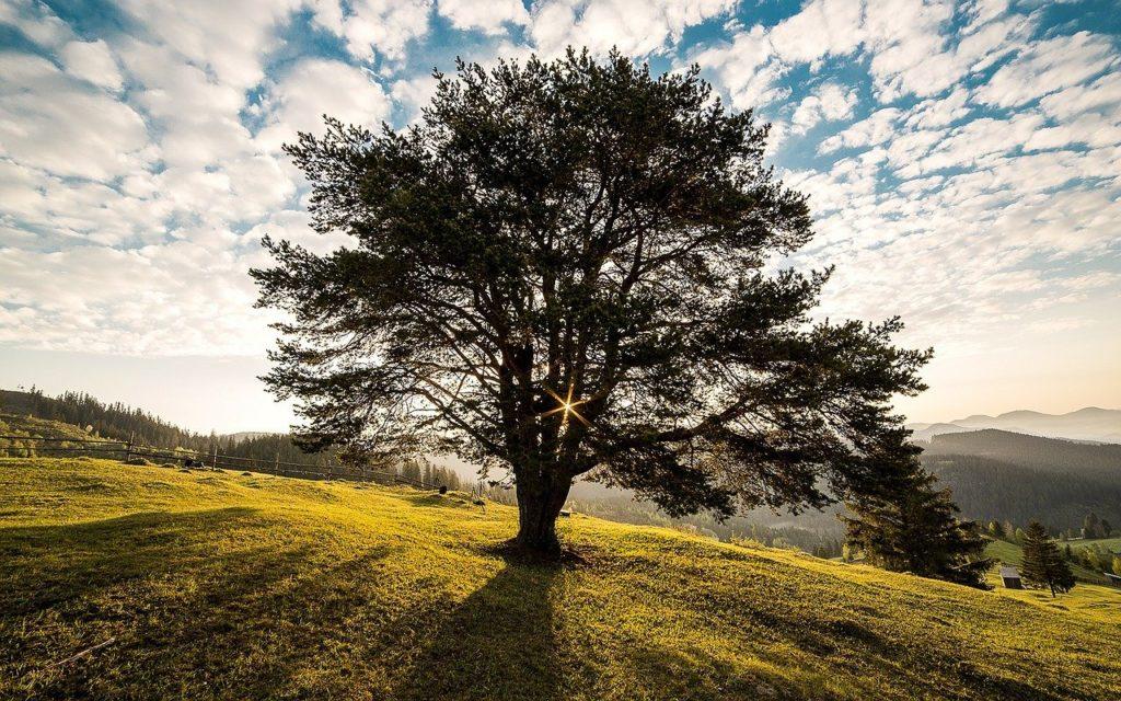 meadow, tree, sunrise-338211.jpg